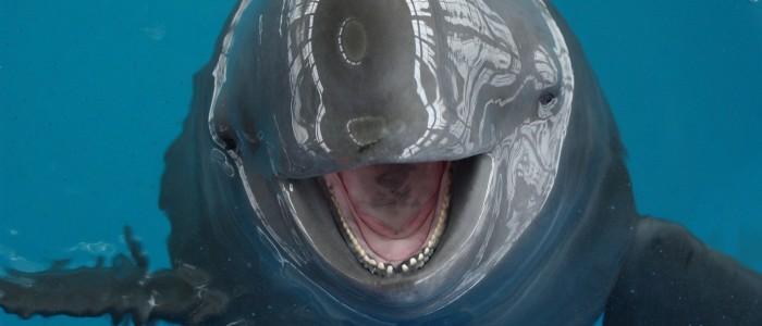 Intensive porpoise?