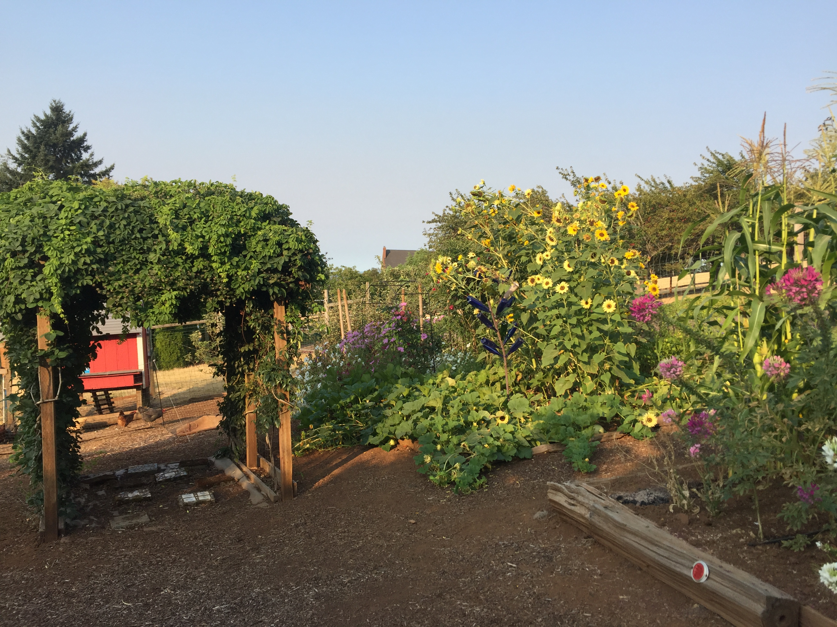 Pam Smith garden